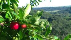 Frutas direto do Pé