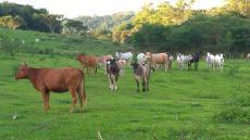 Fazenda de Criação de Gado