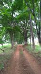 Estradinha da Rodovia para nossa Fazenda