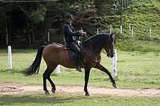 Apresentação Cavalos