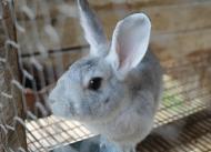 Coelhinhos encantam adultos e crianças