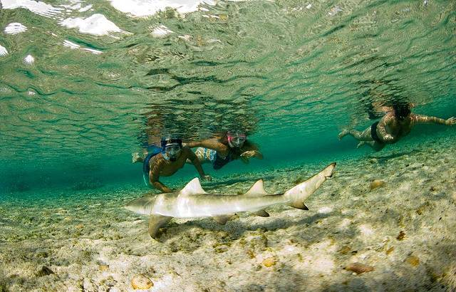 Tubarão na praia do Atalaia