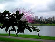 A beleza das flores no Parque Barigui em Curitiba