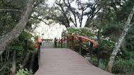 Ponte em meio à natureza