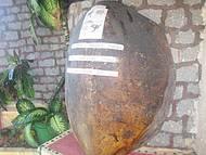 Casco de tartaruga de 200 anos