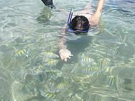 Observando os Peixes