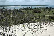 As dunas de Mangue Seco