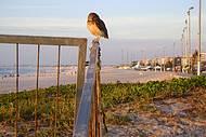 Até a coruja de olho nessa maravilhosa praia!