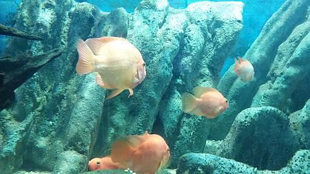 Iguape - Vida marinha