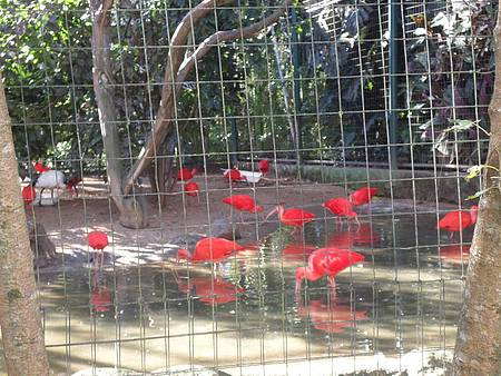 Zoológico de Pomerode - Flamingos