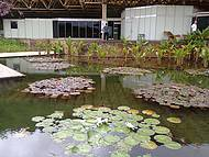 Jardim aquático