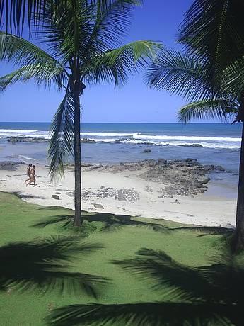 Belos coqueiros emolduram a paisagem.
