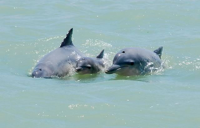 Enseada dos Golfinhos