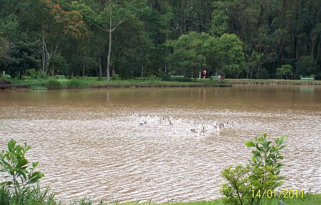 O Lago Pode Fazer o Passeio de Pedalinho,conteplar os Patinhos na Lagoa,lindo!!
