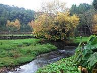 Quintal da Fam�lia Franzen