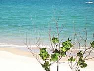 Longe da muvuca na Praia do Francês