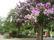 Caramanchão florido