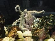 Um dos aquários...
