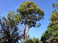 Árvore do parque Cachambu