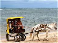 Charrete na Praia do Encanto