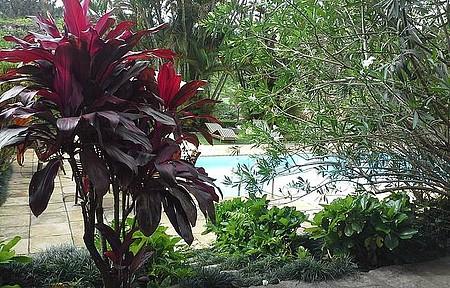 Pousada Vila Alice - Há muitas plantas na pousada