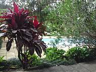 Há muitas plantas na pousada