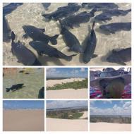 Lagoa dos Tambaquis, praia do Saco e Mangue Seco