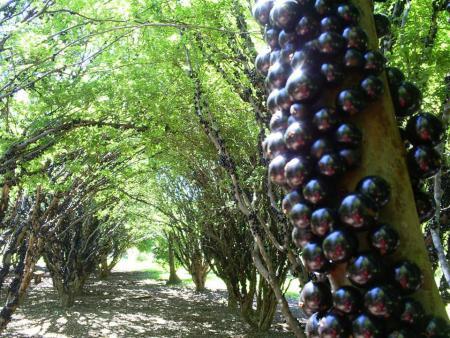 Jabuticaba no pé em Goiás! - Fazenda Jabuticabal fica em Hidrolândia, a 37km