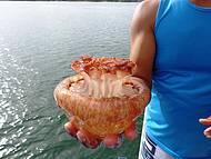 Água viva! Muitas delas na Lagoa!