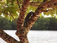 Belezas naturais da ilha