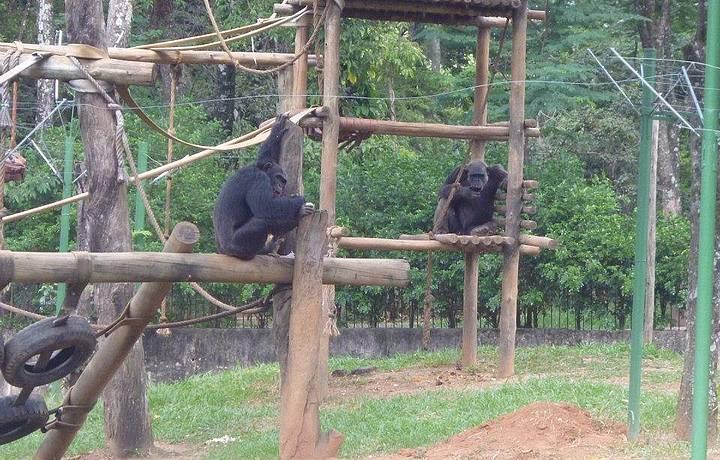 Jardim Zoolgico E Botanico Belo Horizonte Mg Brasil  HD Walls  Find