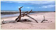 Amendoeira devorada pelo mar