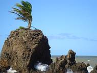 O famoso coqueiro na pedra da praia de Tambaba