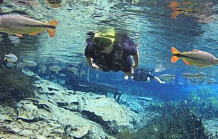 Aquário Natural - Flutuação