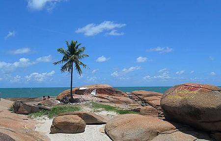 Várzea do Una - Praia do coqueiro solitário