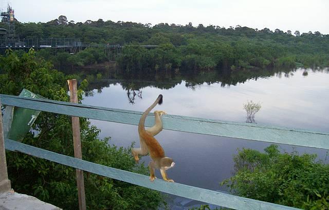 O pulo do macaquinho. A linda natureza.