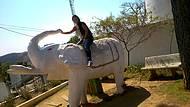 Morro do elefante
