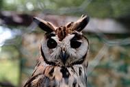 Parque dos Falc�es re�ne centenas de aves