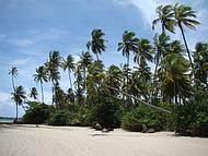 Natureza predomina na Ilha