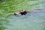 Verão animal no RioZoo
