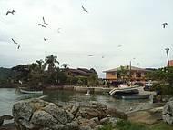 Revoada das gaivotas