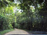 O lindo caminho da Rio-Santos até Puruba