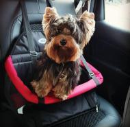 Vai viajar com seu animalzinho?