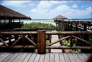 Mangal das Garças: Parque reúne flora e fauna típicas às margens do rio Guamá -