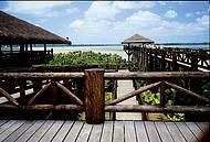 Parque reúne flora e fauna típicas às margens do rio Guamá