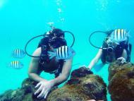 Mergulho com cilindro em Porto de Galinhas Maravilhoso