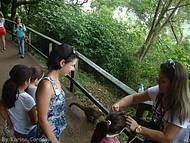Parque das cataratas - Brasil