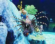 Toda a beleza do AquaRio dentro de casa!