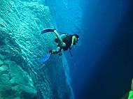 Mergulhos acontecem de abril a novembro
