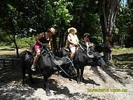 Passeio na Fazenda de Búfalo